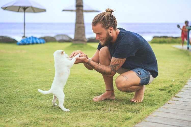 внимательный парень играет с щенком