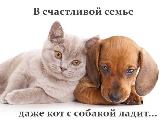 мем - даже кот с собакой