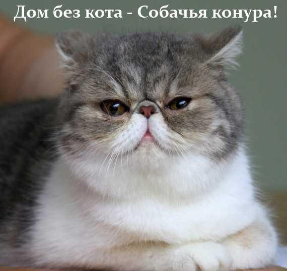 дом без кота - собачья конура
