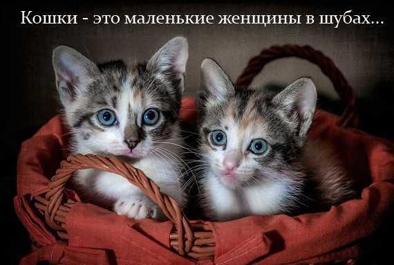 кошки - это маленькие женщины в шубах