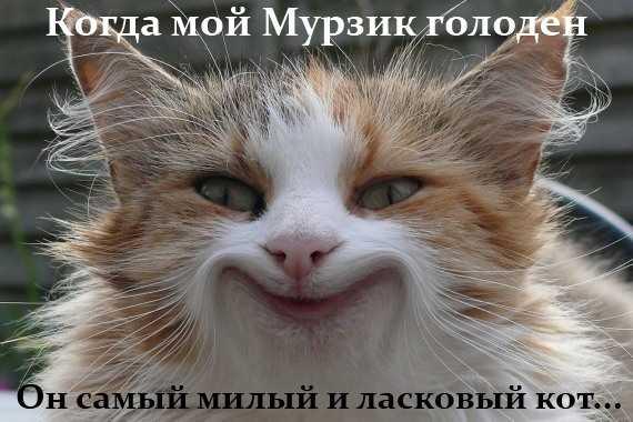 самый милый и ласковый кот