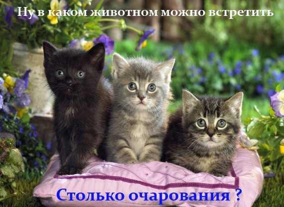 котики - столько очарования