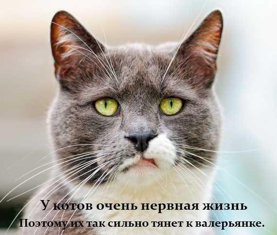 у котов очень нервная жизнь