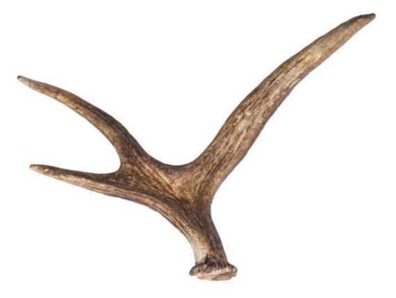 афродизиак - рога оленя